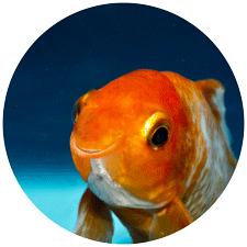 Google a pagamento - Pesce d'Aprile